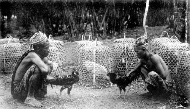 Sejarah Asal Usul Sabung Ayam Tradisional di Indonesia